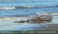 floating wood, sea, oostduinkerke