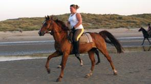 horsebackriding holiday near the beach belgium