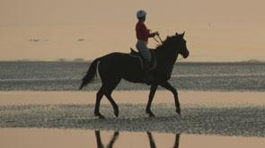 Horseriding at the beach belgium